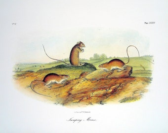Jumping Mouse 1989 Vintage Audubon Book Plate Page for Framing Naturalist Illustration