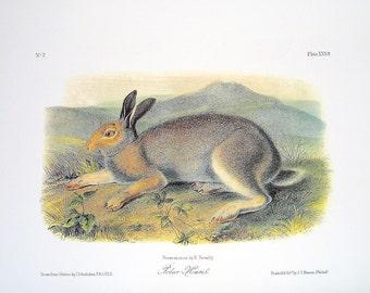 Polar Hare 1989 Vintage Audubon Book Plate Page for Framing Naturalist Illustration