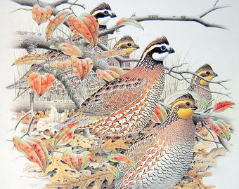 1989 2 Sided Vintage Bird Illustration Northern Bobwhite, Black Rail, Virginia Rail