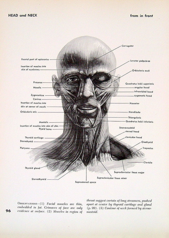 Head And Neck Anatomy Review