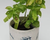 Round Pot, blue herb