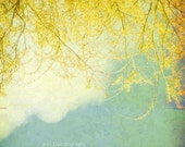 Large Wall Art, Nature Photograph, Abstract, Willow Branches, Landscape - Cottage Chic Photography, Yellow and Blue 20x20 inch print -Willow