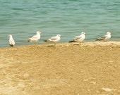 CLEARANCE Beach Photography, Seagulls, Nature, Birds, Ocean Photo, Blue, Nautical Decor, Brown, Tan, Sand, 8x8 inch Print