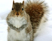 Animal Photograph, Nature Picture, Winter, Squirrel, Grey, Brown, White, Snow, Woodland, Cute  - 5x5 inch Print - You Talkin to Me