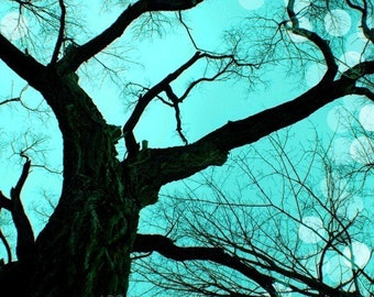 Teal Photo Nature Decor Tree Photograph Surreal Winter Picture Black Tree Photo 8x10 inch Fine Art Photography Print  An Evening to Dream