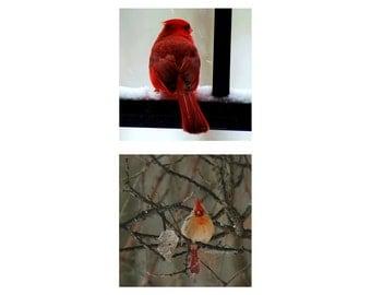 Cardinal Photography, Animal Photographs, Bird Photos, Red, Grey, Black, Nature Pictures - Set of Two 5x5 inch Prints - Cardinal Pair