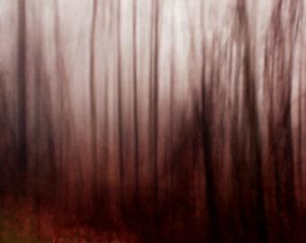 CLEARANCE Dark, Woodland Photo, Gothic, Fairytale, Abstract, Nature, Landscape, Red, Black, Grey, 5x5 Fine Art Print - A Dark Wind