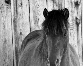 Black and White Photography Horse Art Rustic Decor Animal Photo Grey Monochrome Pony 5x5 inch Fine Art Photography Print Shy Little Pony