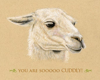 Llama Greeting Card  You are so cuddly  Great for Anniversary  5 x 7 inches