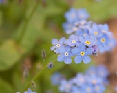 Forget Me Not- Photo Greeting Card