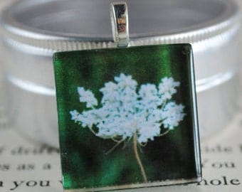 Queen Anne's Lace Fine Art Photo Glass Tile Pendant - Queen Anne's Lace Flower - White Blossom - Nature Photography