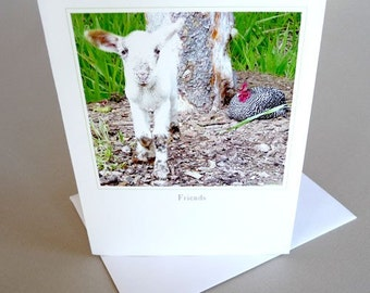 Greeting Card Lamb Farm Life Barn Animals