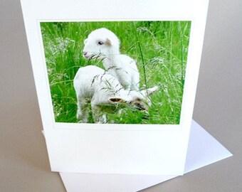 Spring Greeting Card Lamb Barnyard Farm Life Lady Gaga