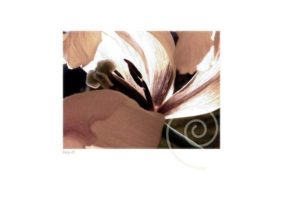 Photography Tulip Botanical Fine Art Print Sunlight