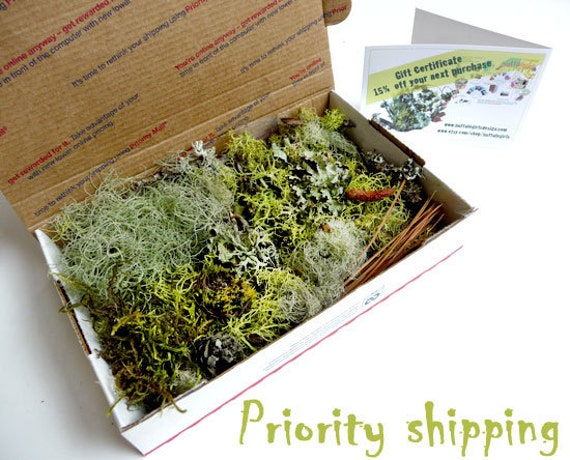 Moss Lichen Terrarium Twigs Forest Organic Collection Priority Mail