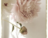 Peony Photograph,  Shabby Chic Wall Art, Pale Pink and Sepia,  Monochromatic Still Life, French Country Home