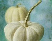 White Pumpkin Photograph,  Food Photography,  Still Life, Kitchen Wall Decor, Autumn Photography,  Decor