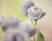 Blue Flower Photo,  Floral Art Print,  Flower Photography, Shabby Chic Wall Decor, Nursery Decor, Bedroom Decor
