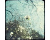 Magnolia Art Print, White Turquoise Decor, Shabby Chic Wall Art, Nature Art, TTV Flower Photography,  Fine Art Print