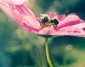 Bee Print, Bee Nursery Decor, Nature photography, Pink Flower Photo,  Fine Art Print, Child Art