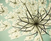 Queen Anne's Lace Photograph, Cottage Chic Pastel  Flower Photography, White  Turquoise Wall Decor, Nature Photography, Still Life