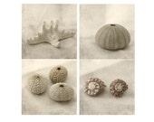 Sea Shell Decor, Seashell Print Set, Sea Urchin, Star Fish, Nautical Art Set, Sepia Photography, Still Life Photography