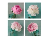 Four Peony Art Print Set, Pink Aqua Wall Decor, Nature Photography, Floral Art Print, Flower Still Life Photos, Botanical Print Set