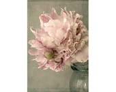 Pink Peony Print, Floral Art Print, Shabby Chic Wall Decor,  French Country Art,  Peony Art, Peony Photography