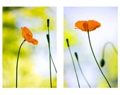 Orange Poppy Photographs, Two Floral Art Prints, Nature Photography, Orange Wall Decor