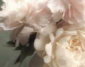 Peony Photo, Flower Photography, Peony Print,  Peony Wall Art, Floral Art Print, Bedroom Art, French Country Decor