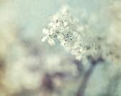 White Flower Photograph, Floral Art Print,  Mint Decor, Shabby Chic Wall Decor, Flower Still Life