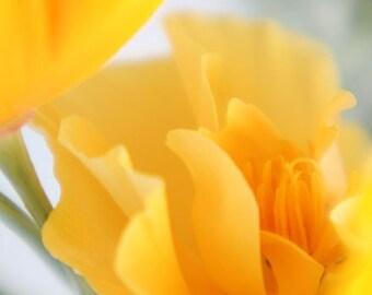 California Poppy Card,  Photo Card, Yellow, Orange, Tangerine, Blank Card