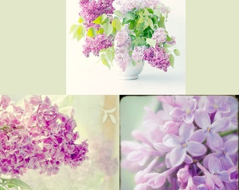 Lilac Photograph Set, Flower Still Life Set, Purple Wall Decor, Floral Art Print Set, Lilac Wall Art