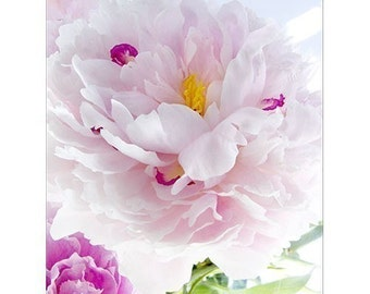 Pink Peony Card, Mother's Day Card,  Love Card, Anniversary Card, Flower Photograph