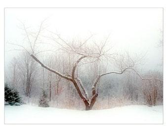 Winter Landscape Photograph, New England Rural Snow Scene, Rustic Wall Decor, Old Apple Tree, Monochromatic Holiday Decor