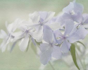 Blue Phlox Print, Blue Flower Photography, Blue Wall Decor,  Floral Art Print, Nursery Art, Bedroom Decor