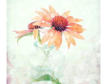 Orange Daisy Print,  Floral Art Print, Coneflower Photo, Apricot Flower Photography, Flower Home Decor