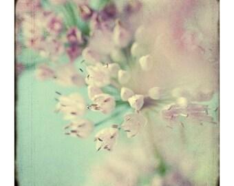 Soft Focus Photograph, Pink Allium Print, Shabby Chic Wall Art, Floral Art Print, Flower Photo, Floral Wall Decor, Bedroom Decor