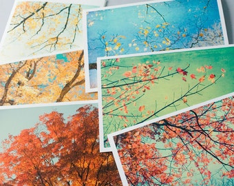 Card Set, Six Autumn Photo Cards Foliage,  New England Autumn Photography, Trees, Red, Gold, Turquoise
