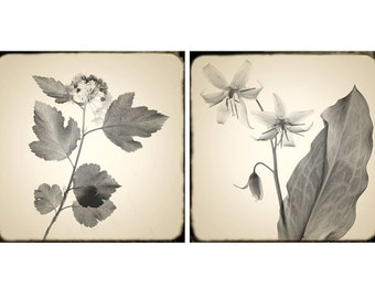 Sepia Photography, Botanical Prints, Floral Wall Decor,  Shabby Chic Home, Rustic Wall Art