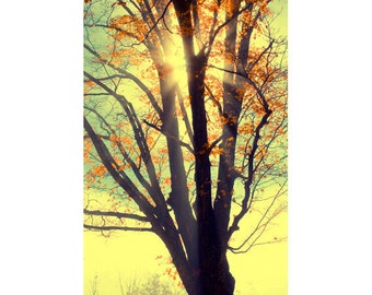 Autumn Photography,  Landscape, Maple Tree Print, Sunset Print,  Red, Gold Wall Decor, Rustic  Decor