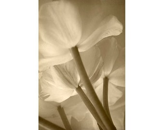 Tulip Print, Sepia Photography, Tulips Photo,  Flower Photography, Botanical Art, Shabby Chic Decor