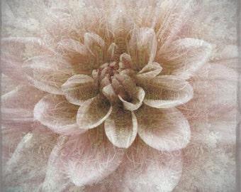 Dahlia Photograph,  Sepia Botanical Art Print, Shabby Chic Wall Decor, Flower Photography, Monochromatic
