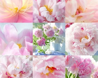 Peony Photographic, Mosaic of Still Life Photos, Pink Wall Decor, Flower Photograph