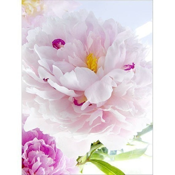Pink Peony Card,  Love Card, Anniversary Card, Flower Photograph