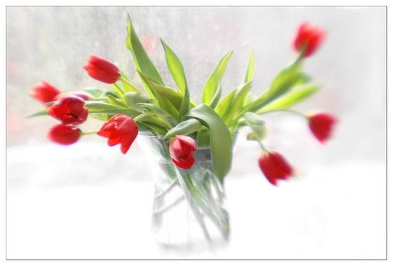 Red Tulip Print, Still Life Photography,  Floral Art Print,  Floral Wall Decor, Tulip Art, Flower Wall Art