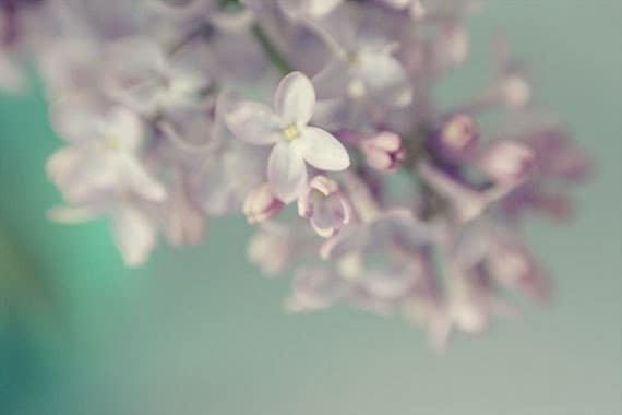 Lilac Print, Flower Photography, Floral Art Print, PurpleTurquoise Decor, Shabby Chic Wall Decor, Flower Wall Art, Nursery Art