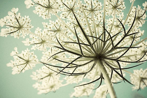 Queen Anne's Lace Photograph, Cottage Chic Decor, Hygge Decor, Pastel Wall Art,  Flower Photography, White Mint Decor,  Still Life