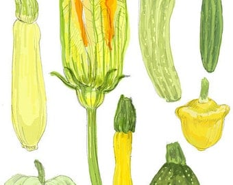 Summer Squash -  Boxed Set of 8 Greeting Cards