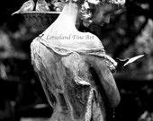 Conservatory Birdbath (B&W 8x10 Fine Art Print)